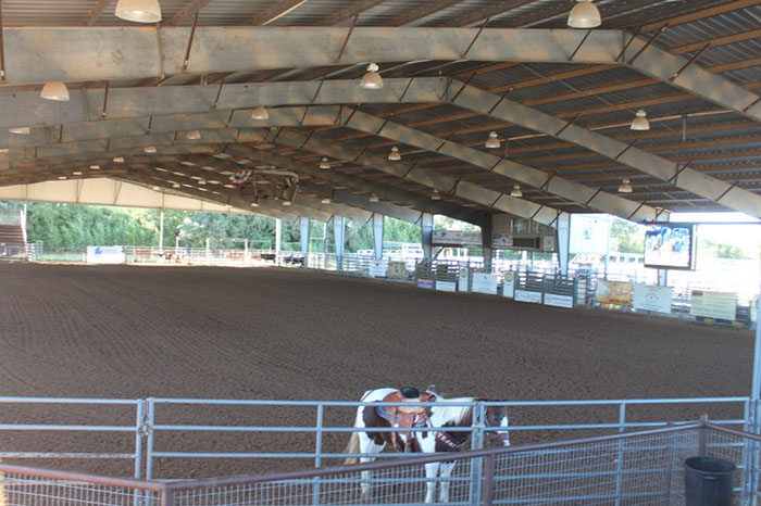 horse in rodeo arena